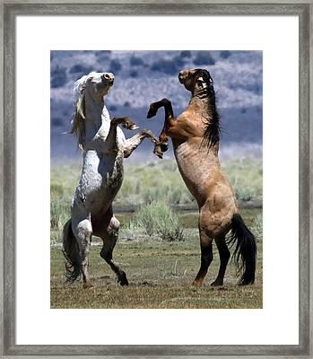 Stallion Fandango Framed Print
