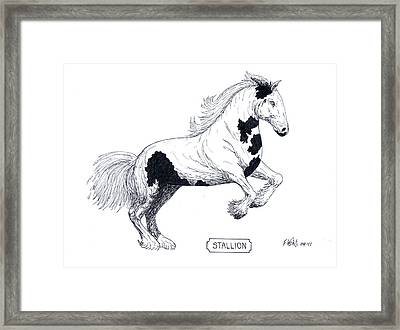 Stallion Framed Print by Frederic Kohli