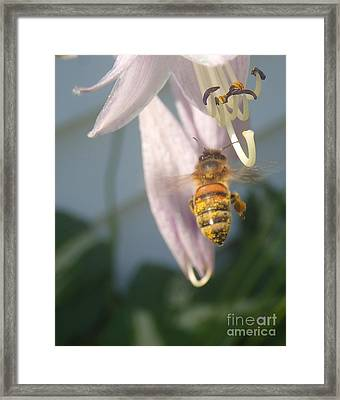 Stamen Attraction Framed Print