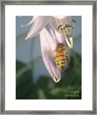 Stamen Attraction Framed Print by Christina Verdgeline