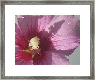 Stamens Shadow Framed Print by Wide Awake Arts
