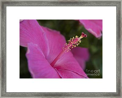 Stamin Framed Print by Lionel Martinez