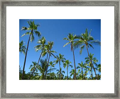Stand Of Palms Framed Print