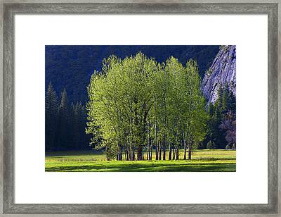 Stand Of Trees Yosemite Valley Framed Print by Garry Gay