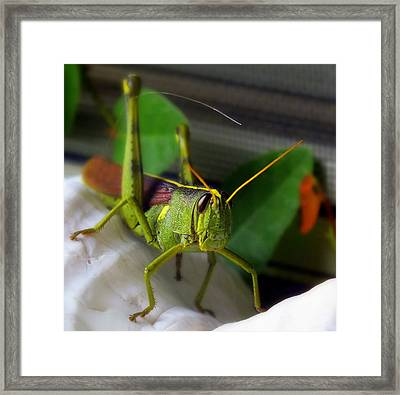 Stand Off Framed Print by Karen Wiles