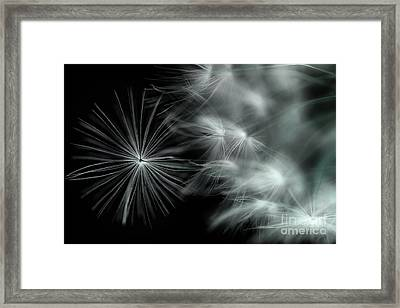 Stand Out And Be Noticed Framed Print