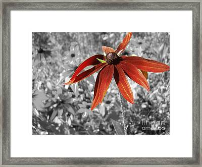Stand Out  Framed Print by Cathy  Beharriell