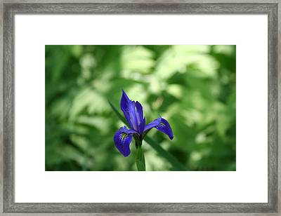 Stand-out Framed Print