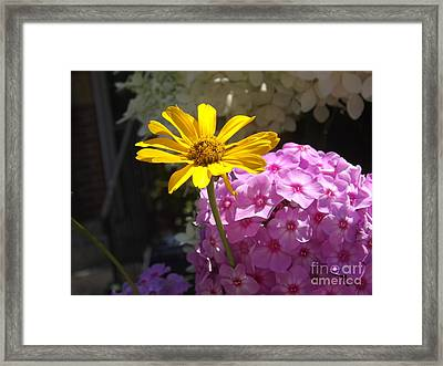 Stand Out From The Crowd Framed Print by Lingfai Leung