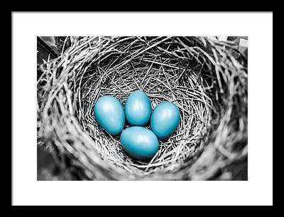 Egg Framed Prints