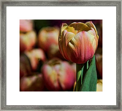 Framed Print featuring the photograph Stand Out by Tammy Espino