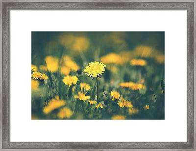 Framed Print featuring the photograph Stand Out by Viviana  Nadowski