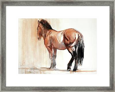 Stand  Przewalski Framed Print by Mark Adlington