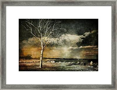 Stand Strong Framed Print by Susan McMenamin