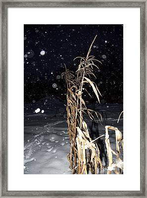 Framed Print featuring the photograph Stand Tall by Annette Berglund