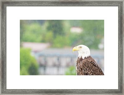 Stand The Rain Framed Print