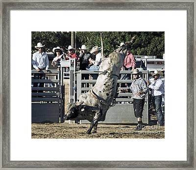 Stand Up Performance Framed Print by Gwyn Newcombe