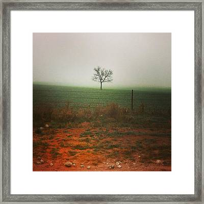 Framed Print featuring the photograph Standing Alone, A Lone Tree In The Fog. by Shelli Fitzpatrick