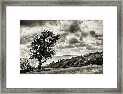 Standing Alone And Moody Framed Print by Joann Long