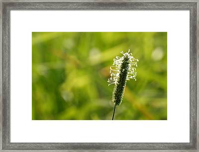 Standing Alone Framed Print by Betty-Anne McDonald