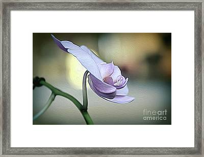 Standing Alone In Silence Framed Print