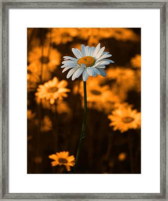 Standing Alone Framed Print by Linda McRae