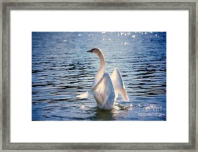 Standing At Attention  Framed Print