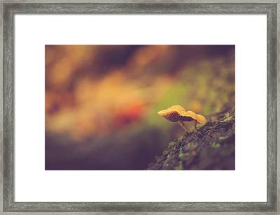 Standing At The Edge Framed Print by Shane Holsclaw