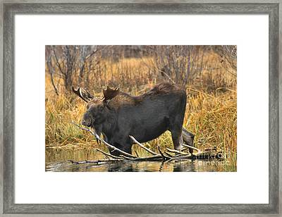 Standing By The Branch Framed Print