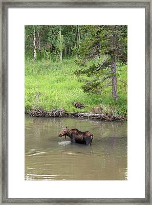 Framed Print featuring the photograph Standing Guard by James BO Insogna