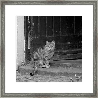Standing Guard Framed Print by Mike McGlothlen