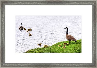 Framed Print featuring the photograph Standing Guard by Onyonet  Photo Studios