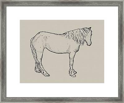 Standing Horse Framed Print