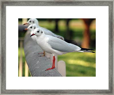 Standing In Line Framed Print by Graham Taylor