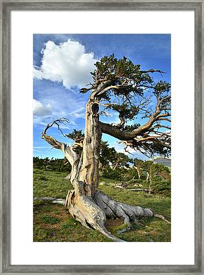 Standing In The Wind Framed Print by Ray Mathis
