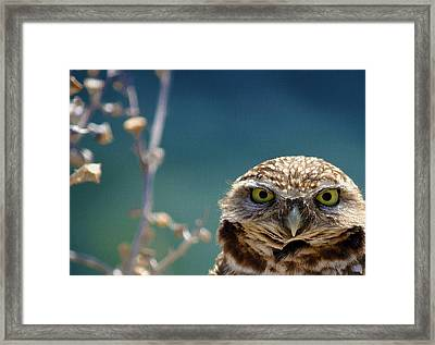 Standing My Ground Deux Framed Print by Fraida Gutovich
