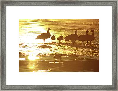 Standing On Ice Framed Print