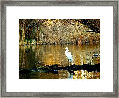 Standing On Shakey Ground Framed Print