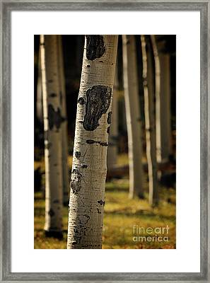 Standing Out Amongst The Others Framed Print