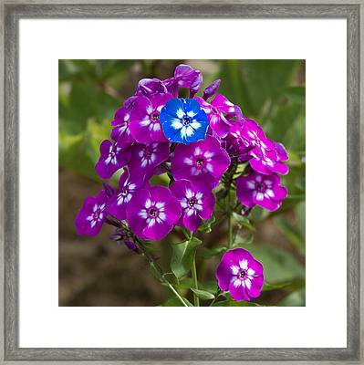 Standing Out From The Crowd Framed Print