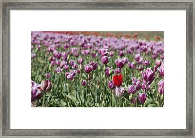 Standing Out In A Crowd Framed Print by Nick Gustafson