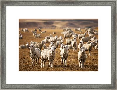 Standing Out In The Herd Framed Print by Todd Klassy