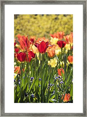 Framed Print featuring the photograph Standing Out  by Jeanne May