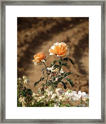 Framed Print featuring the photograph Standing Out by Laurel Powell