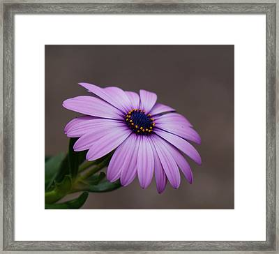 Standing Out Framed Print