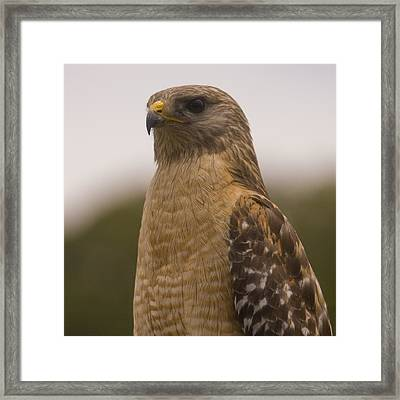 Standing Proud Framed Print by Anthony Towers