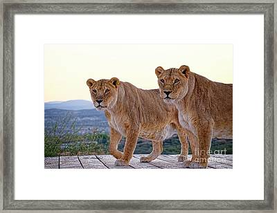 Standing Side By Side Framed Print by Lucinda Walter