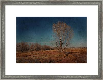 Framed Print featuring the photograph Standing Solo by Barbara Manis