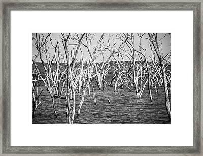 Standing Still Framed Print