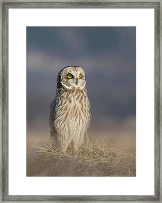 Framed Print featuring the photograph Standing Tall by Angie Vogel